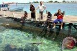 Wisatawan mengunjungi penangkaran ikan Hiu Perairan Pulau Pari di kawasan Kabupaten Administrasi Kepulauan Seribu, Jakarta, Rabu (20/4). Kepulauan Seribu yang menjadi salah satu dari 10 destinasi wisata nasional tahun 2016 menawarkan berbagai wisata kelautan di antaranya wisata edukasi lingkungan yaitu penangkaran ikan Hiu dan penangkaran Penyu Sisik. ANTARA FOTO/Anis Efizudin/wdy/16