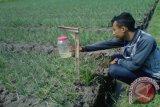 Petani bawang Bantul antisipasi serangan ulat