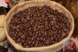 Produksi kopi Sleman turun akibat kemarau basah