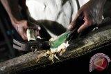 Seorang pedagang memukul penganan Sopang atau Sotong Pangkong yang dijual seharga Rp10 ribu - Rp40 ribu per potong, di Jalan Merdeka Barat, Pontianak, Kalbar, Selasa (14/6) malam. Sopang adalah kuliner khas Pontianak berupa cumi-cumi kering bakar yang dipukul-pukul dengan menggunakan palu, dan dijual hanya pada malam hari selama bulan Ramadan. ANTARA FOTO/Jessica Helena Wuysang/16