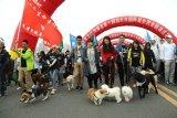 Festival daging anjing di China tetap dilaksanakan