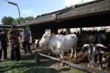 Kepala Dinas Perindustrian dan Perdagangan (Disperindag) Provinsi Jawa Timur M Ardi Prasetyawan (kedua kiri) meninjau stok sapi saat melakukan inspeksi mendadak di kandang karantina Rumah Potong Hewan (RPH) Pegirian, Surabaya, Jawa Timur, Jumat (15/7). Sidak tersebut bertujuan untuk memantau proses pemotongan dan stok daging sapi yang akan dijual di sejumlah pasar tradisional pasca Lebaran. Antara Jatim/Moch Asim/zk/16