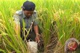 Bioteknologi penting untuk pertanian Indonesia