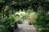 Berkebun di rumah bantu halau kebosanan selama selama isolasi