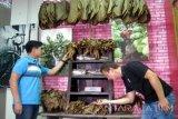 Dua mahasiswa asing peserta 'Universitas Jember International Cultural Camp' melihat berbagai jenis daun tembakau yang dikeringkan di Museum dan Perpustakaan Tembakau Jember, Jawa Timur, Senin (8/8). Museum yang dikelola UPT Pengujian Sertifikasi Mutu Barang - Lembaga Tembakau Disperindag Jatim itu juga mengoleksi berbagai daun tembakau dari sejumlah daerah di Indonesia. Antarajatim/ Zumrotun Solichah/zk/16 Attachments area
