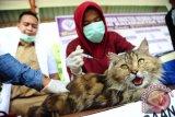 Dua dokter hewan melakukan proses menyuntikkan vaksin anti rabies ke seekor kucing, saat peringatan Hari Rabies se-dunia di Pontianak, Kalbar, Rabu (28/9). Kementerian Kesehatan menyalurkan alat kesehatan guna mengantisipasi rabies di Kalbar, yaitu berupa 25 ribu dosis vaksin antirabies berikut dengan kulkas penyimpanan 10 unit, kotak dingin 10 unit dan 282 alat pemvaksin/vaksinator. ANTARA FOTO/Jessica Helena Wuysang/16