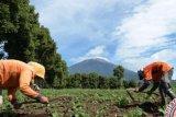 Dorong Peningkatan Komoditi Lokal, Siak AKan Miliki Taman Teknologi Pertanian