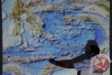 Potensi Wisata Bahari Paus Biru