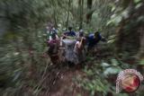 Sejumlah relawan dari International Animal Rescue (IAR) Ketapang membawa kandang berisi satu dari dua individu Orangutan (pongo pygmaeus) yang hendak dilepasliarkan di hutan Taman Nasional Bukit Baka Bukit Raya (TNBBBR), Kabupaten Melawi, Kalbar, Jumat (26/11). International Animal Rescue (IAR) Indonesia bersama Balai Konservasi dan Sumber Daya Alam (BKSDA) Kalbar dan Balai Taman Nasional Bukit Baka Bukit Raya melakukan pelepasan dua individu orangutan (Pongo Pygmaeus) yaitu Johny dan Desi yang telah menjalani rehabilitasi selama empat tahun di Pusat Penyelamatan dan Rehabilitasi IAR Indonesia. ANTARA FOTO/ Heribertus Suciadi/jhw/16    International Animal Rescue (IAR) Indonesia bersama Balai Konservasi dan Sumber Daya Alam (BKSDA) Kalbar dan Balai Taman Nasional Bukit Baka Bukit Raya melakukan pelepasan dua individu orangutan (Pongo Pygmaeus) yaitu Johny dan Desi yang telah menjalani rehabilitasi selama empat tahun di Pusat Penyelamatan dan Rehabilitasi IAR Indonesia. ANTARA FOTO/ Heribertus Suciadi/jhw/16