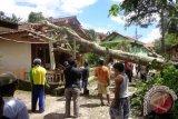 Warga Oebelo Bersihkan Rumah dari Pohon Tumbang