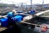 Nilai ekspor perikanan Lampung triwulan I 2001 capai Rp618 miliar