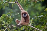 Taman nasional Thailand diberi status warisan UNESCO di tengah isu pelanggaran HAM