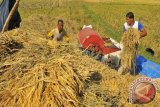 Produksi padi naik 0,14 persen hingga September 2021