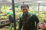 Kabupaten Sigi kembangkan bambu di lahan tandus