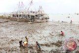 Pulau Pasaran jadi tempat cari kerang bulu