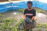 Sidat Mencuri Perhatian Pembudi Daya Ikan Banyumas