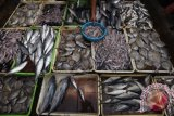 Riau gandeng UR budidaya ikan terubuk