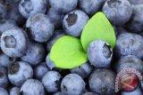 Ternyata Konsumsi Blueberry Bantu Lawan Sel Kanker Serviks