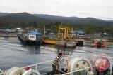 BUMN Bantu Pengembangan Jambu Mete dan Rumput Laut di Bangkep