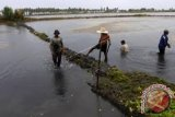 Potensi tambak perikanan Buton Utara menanti investor