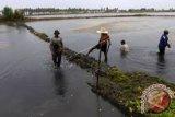 Pemkab Kolaka Akan Revitalisasi 1.000 Hektare Tambak
