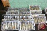Kinerja ekspor ikan  Sumatera Selatan anjlok