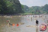 LIPI imbau nelayan Maninjau bunuh ikan predator