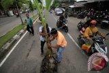 Warga menanam batang pisang di lubang jalan pasca terjadi kecelakan berat di lintas transit jalan pase Lhokseumawe, Aceh, Jumat (26/5). Kerusakan sejumlah lubang jalan di jalur padat lalu lintas itu berdampak banyak terjadi kecelakaan sepeda motor siang dan malam hari akibat terperosok kedalam lubang, mengancam keselamatan pengguna jalan lainnya pada musim mudik Lebaran. ANTARA FOTO/Rahmad/pd/17.