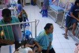 Ada 380 kasus DBD di Pekanbaru