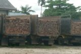 Penyelundup kayu ilegal diburu Polres Kotim