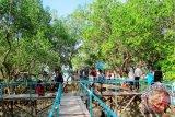Hutan Mangrove Ramai Dikunjungi