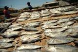 Pengusaha ikan asin Pekalongan kesulitan peroleh garam