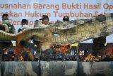 Petugas bersiap membakar barang bukti kulit buaya muara (Crocodylus porosus) hasil operasi penegakan hukum saat pemusnahan di kantor Balai Konservasi Sumber Daya Alam (BKSDA) Jambi, Telanaipura, Jambi, Minggu (30/7). Pemusnahan tersebut merupakan hasil operasi penegakan hukum BKSDA Jambi dengan Balai Gakkum LHK Wilayah II Sumatera dan Polda Jambi dalam tiga tahun terakhir yang mengungkap 20 kasus perburuan dan perdagangan satwa liar dengan 35 tersangka lebih dan barang bukti di antaranya delapan lembar kulit harimau Sumatera, tiga offset harimau Sumatera, tujuh offset kepala rusa dan satwa lain, tiga buah gading gajah Sumatera, dan dua set tulang belulang harimau Sumatera. ANTARA FOTO/Wahdi Septiawan/aww/17.