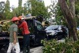 Petugas pemangkas pohon Pekanbaru tetap bekerja ditengah wabah COVID-19