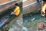Petugas Rescue 911 Banjarmain mengankat mayat bayi berkelamin laki-laki dari selokan di depan Gedung Sultan Suriansyah Jalan Brigjen Hasan Basri, Banjarmasin, Minggu (27/8).Penemuan mayat bayi di pagi itu membuat pengguna jalan raya berbond-bondong ingin menyaksikannya hingga menimbulkan kemacetan.(Foto Antaranews Kalsel/hafis/reza/rizal)