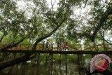 Mangrove Bombana tersebar di enam wilayah pesisir