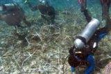 Penyelamatan Terumbu Karang Sebagai Kunci Kelestarian Laut