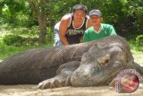 Komodo Island Witnesses Increase In Number of Tourist Arrivals