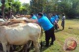 Upsus SIWAB tingkatkan populasi sapi di NTT