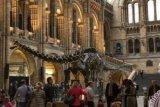 Ahli Paleontologi University of Coloradi Perkenalkan Dinosaurus Pemakan Tumbuhan