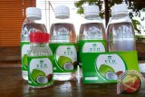 Pakar Untan: VCO dapat membunuh virus corona