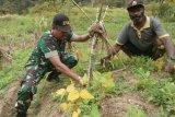 Babinsa Koramil Mapia bantu petani siapkan bibit kopi dan kedelai