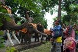 Objek Wisata Way Kambas ditutup karena corona, gajah-gajah dan pawangnya lebih rileks