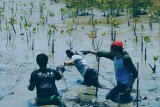 Serikat pekerja diajak tanam 100 ribu mangrove