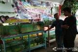 Disuntik Dana, BBI Dawe Dijadikan Pembibitan Ikan Hias
