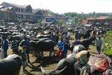 Pasar Bolu Toraja Hasilkan Transaksi Puluhan Miliar Rupiah