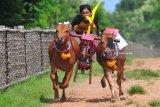 Joki memacu sapi kerapan di Lapangan Pakong, Durbuk, Pamekasan, Jawa Timur, Jumat (26/1). Menjelang kerapan sapi se Madura pada pekan ke-tiga Februari 2018 para pemilik sapi kerapan mulai melakukan uji coba guna meningkatkan kemampuan berlari sapi-sapi tersebut. Antara jatim/Saiful Bahri/zk/18.