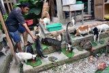Garda Satwa apresiasi polisi mengungkap pelaku pemakan kucing di Kemayoran