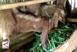DPMPT temukan gudang pakan ternak belum berizin