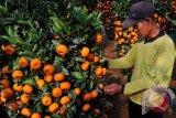 Apa saja manfaat kulit jeruk bagi kesehatan?